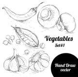 Sistema dibujado mano del estilo del bosquejo de verduras Ejemplo del vector de la comida del eco del vintage Pimientas maduras Fotografía de archivo