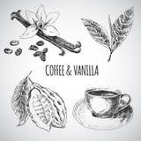 Sistema dibujado mano del vector con las especias del postre Ilustración de la vendimia Colección retra de vainilla, cacao, grano Imagenes de archivo
