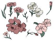 Sistema dibujado mano del vector de flores en garabato ilustración del vector