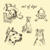 Sistema dibujado mano del vector de perros Fotografía de archivo libre de regalías