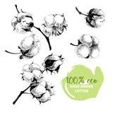 Sistema dibujado mano del vector de ramas del algodón eco 100 Fotografía de archivo libre de regalías