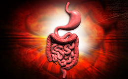 Sistema digestivo humano Imagem de Stock Royalty Free