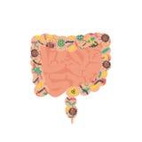 Sistema digestivo humano do intestino ilustração do vetor