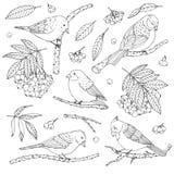 Sistema exhausto del vector de la mano de pájaros, de ramas, de hojas y de contornos de la sorba aislados en el fondo blanco ilustración del vector