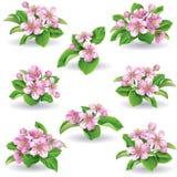 Sistema floral Imagenes de archivo