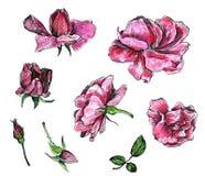 Sistema floral de la acuarela Fotos de archivo