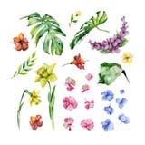 Sistema floral de la acuarela Imagen de archivo libre de regalías