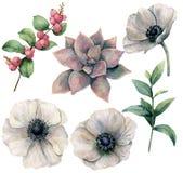Sistema floral de la acuarela con la anémona y las plantas blancas Succulent rosado pintado a mano, hojas del eucalipto y hyperic Foto de archivo