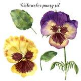 Sistema floral de la acuarela con el pensamiento Ejemplo pintado a mano con las hojas, las flores de la viola y las ramas aislada ilustración del vector