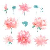 Sistema floral de la acuarela con las flores de loto Imagen de archivo libre de regalías