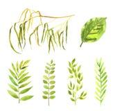 Sistema floral de la acuarela de la primavera ilustración del vector