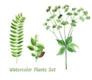 Sistema floral de la acuarela de plantas verdes stock de ilustración