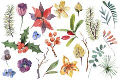 Sistema floral de la acuarela del invierno de elementos del diseño de la Navidad libre illustration