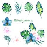 Sistema floral de la acuarela para su diseño Foto de archivo libre de regalías