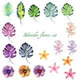 Sistema floral de la acuarela para su diseño Fotografía de archivo libre de regalías