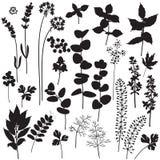 Sistema floral de la silueta de los elementos
