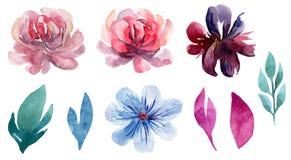 Sistema floral del clip art del vector de la acuarela Imagenes de archivo