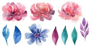 Sistema floral del clip art del vector de la acuarela Fotos de archivo