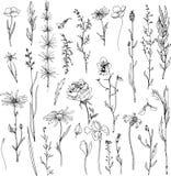 Sistema floral del garabato stock de ilustración