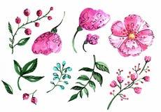 Sistema floral del vector Colección floral colorida para el diseño Imagen de archivo libre de regalías