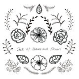 Sistema floral del vector Colección gráfica con las hojas y las flores, elementos de dibujo Fotografía de archivo libre de regalías