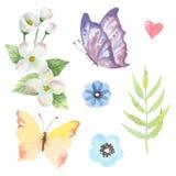 Sistema floral del vector Colección floral púrpura colorida con las hojas y las flores imagen de archivo libre de regalías