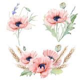 Sistema floral del vintage de la acuarela Fotografía de archivo