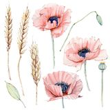 Sistema floral del vintage de la acuarela Fotos de archivo