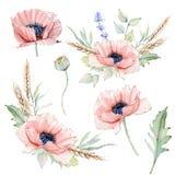 Sistema floral del vintage de la acuarela Imágenes de archivo libres de regalías