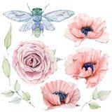 Sistema floral del vintage de la acuarela Imagenes de archivo