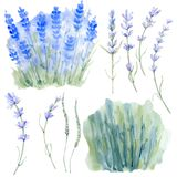 Sistema floral del vintage de la acuarela Foto de archivo libre de regalías