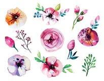 Sistema floral dibujado mano de la acuarela del vector Imágenes de archivo libres de regalías