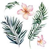 Sistema floral exótico tropical Flores rosadas hermosas del plumeria y hojas de palma verdes aisladas en el fondo blanco ilustración del vector