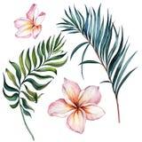 Sistema floral exótico tropical Flores rosadas hermosas del plumeria y hojas de palma verdes aisladas en el fondo blanco libre illustration