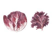 Sistema fresco de los verdes del ejemplo de la acuarela - la hoja de la ensalada del rossa del radiccio y del lolo aisló libre illustration