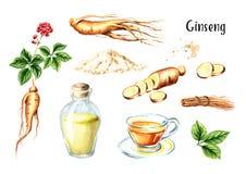 Sistema fresco orgánico del ginseng Raíz, hoja, flor, té, tinte Ejemplo dibujado mano de la acuarela, aislado en el fondo blanco libre illustration