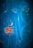 Sistema gastrointestinal y DNA ilustración del vector