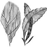 Sistema gráfico del coral Concepto del acuario para el arte del tatuaje o diseño de la camiseta aislado en el fondo blanco Imagen de archivo