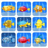 Sistema grande de los animales coloridos de moda del filón de la historieta Pescados, mamífero, crustáceos Delfín y tiburón, pulp libre illustration
