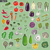 Sistema grande de verduras coloreadas de la etiqueta libre illustration