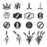 Sistema grande natural del vector Fotografía de archivo libre de regalías