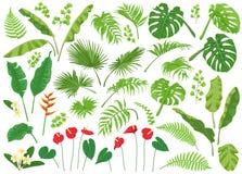 Sistema grande tropical de las hojas y de las flores ilustración del vector
