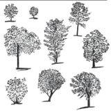 Sistema Handdrawn de árboles de la tinta Fije de ejemplos bosquejados Bosquejos negros de la tinta y del cepillo de la picea para stock de ilustración