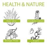 Sistema Handdrawn - salud y naturaleza Colección de Imágenes de archivo libres de regalías