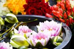Sistema hermoso de brotes de flor Imagen de archivo libre de regalías