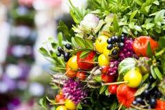 Sistema hermoso de brotes de flor Imagen de archivo