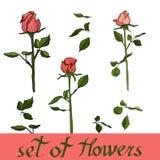 Sistema hermoso de flores, vector de rosas Ejemplo floral del vector foto de archivo