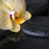 Sistema hermoso del balneario de la orquídea amarilla (phalaenopsis), ZENES Stone Imágenes de archivo libres de regalías