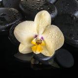 Sistema hermoso del balneario de la orquídea amarilla (phalaenopsis), ZENES Stone Fotos de archivo libres de regalías