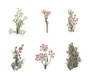 Sistema hermoso del cuento de hadas de flores coloridas de la acuarela Conjunto 2 Imagen de archivo